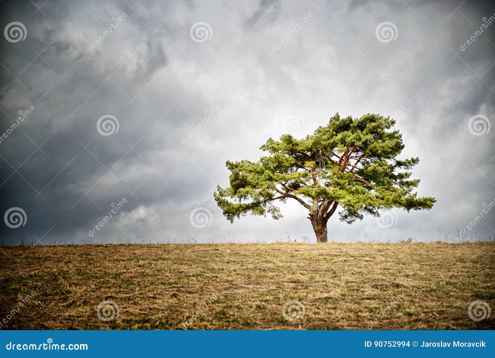 Eenzame boom op horizon