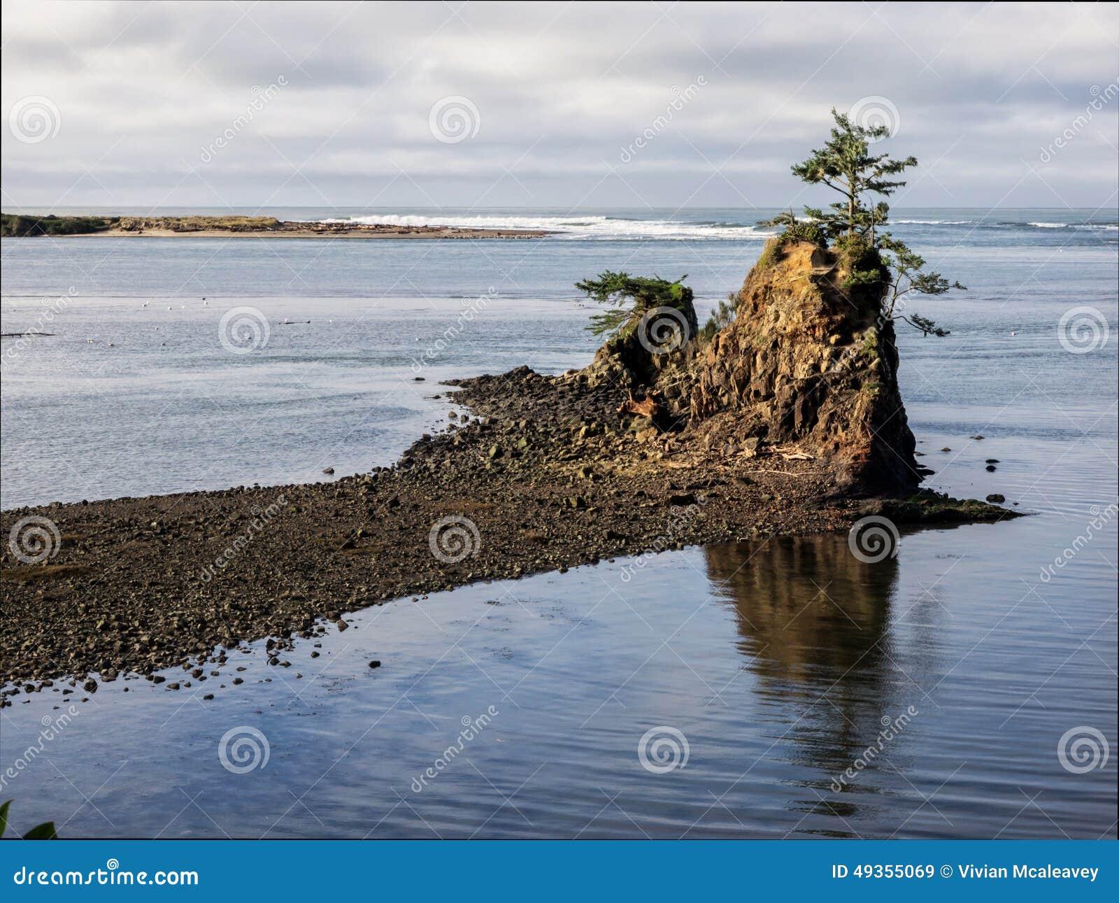 Eenzame boom op rots bij kustbaai