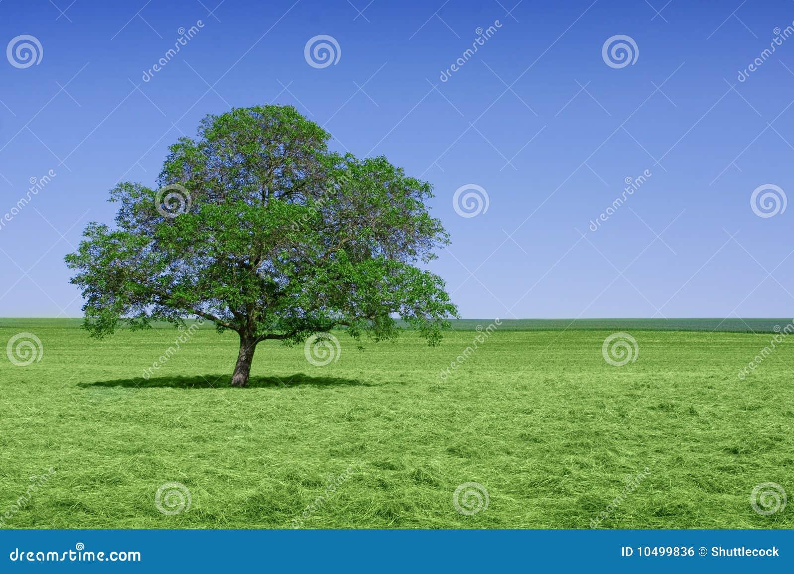 Eenzame groene boom in aard