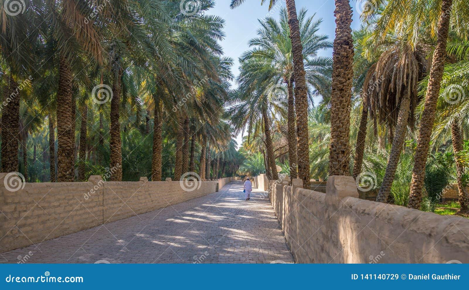 Eenzame leurder in Al Ain Oasis, Verenigde Arabische Emiraten