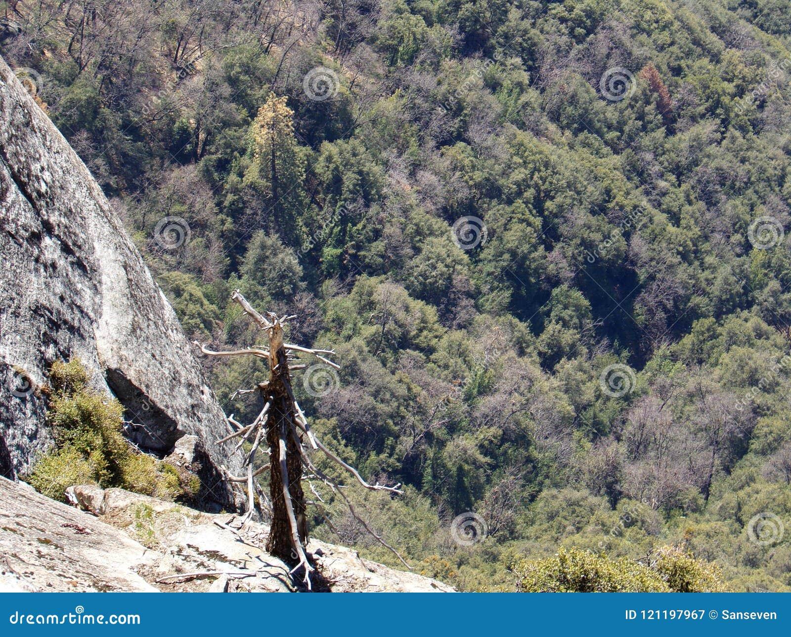 Eenzame opgedroogde boom op de Bovenkant van Moro Rock met zijn vast gesteentetextuur, die bergen en valleien overzien - Sequoia