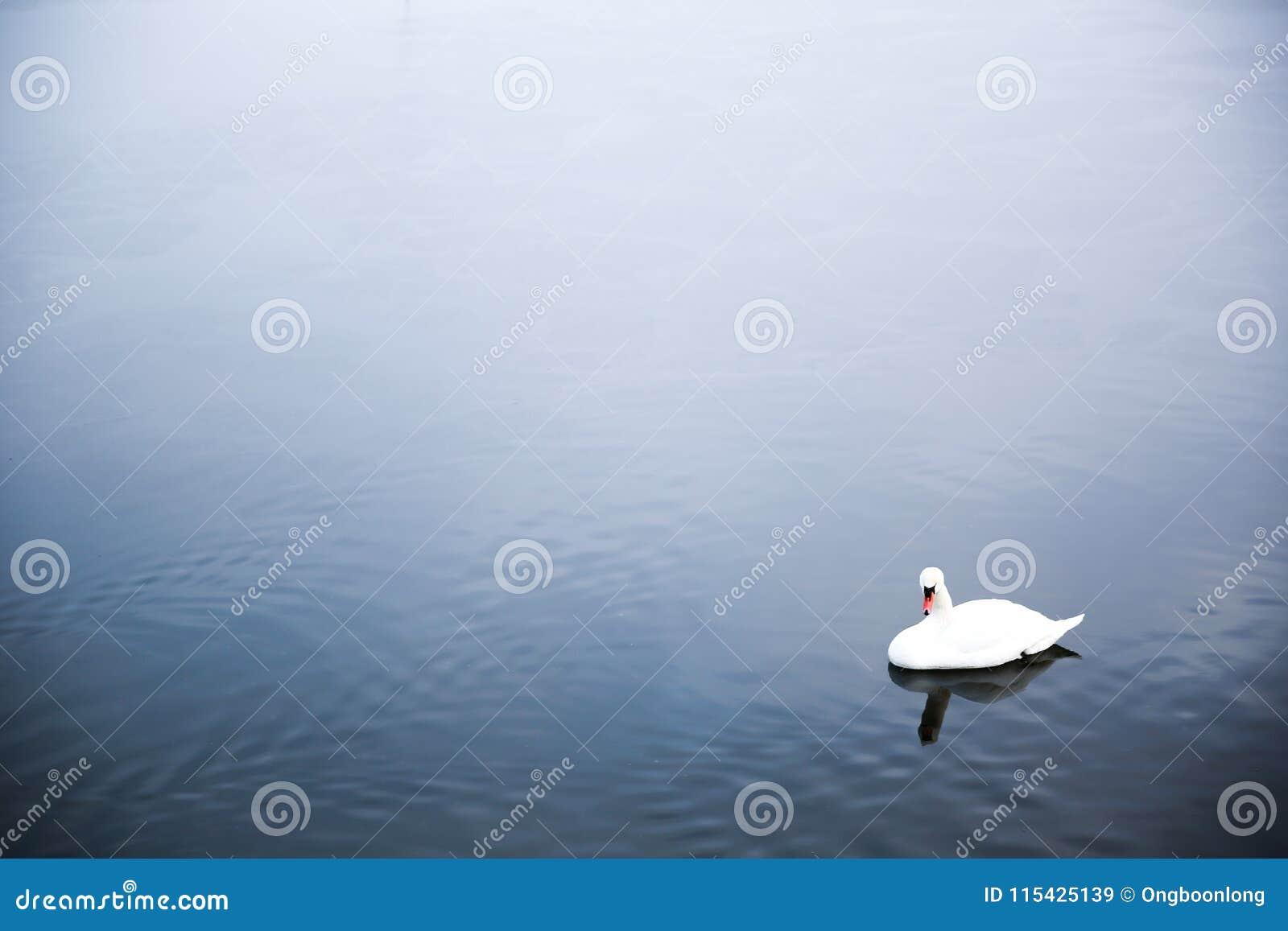 Eenzame Zwaan bij een meer