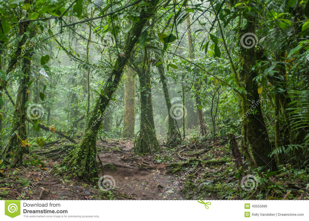 Trees Ferns Ivies And Vines Combine To Set An Eerie Feeling In A