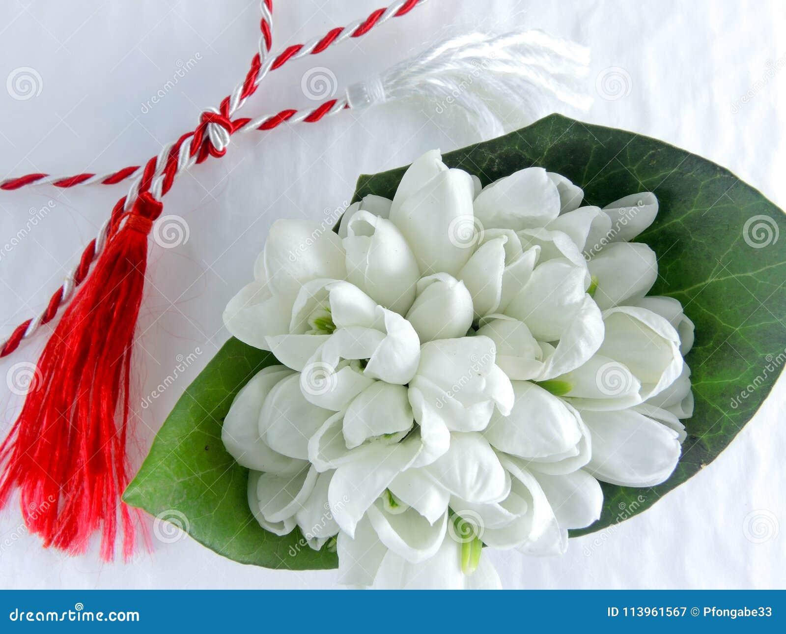 Eerste van Maart-traditie witte en rode koord en ghiocel sneeuwklokjesbloem