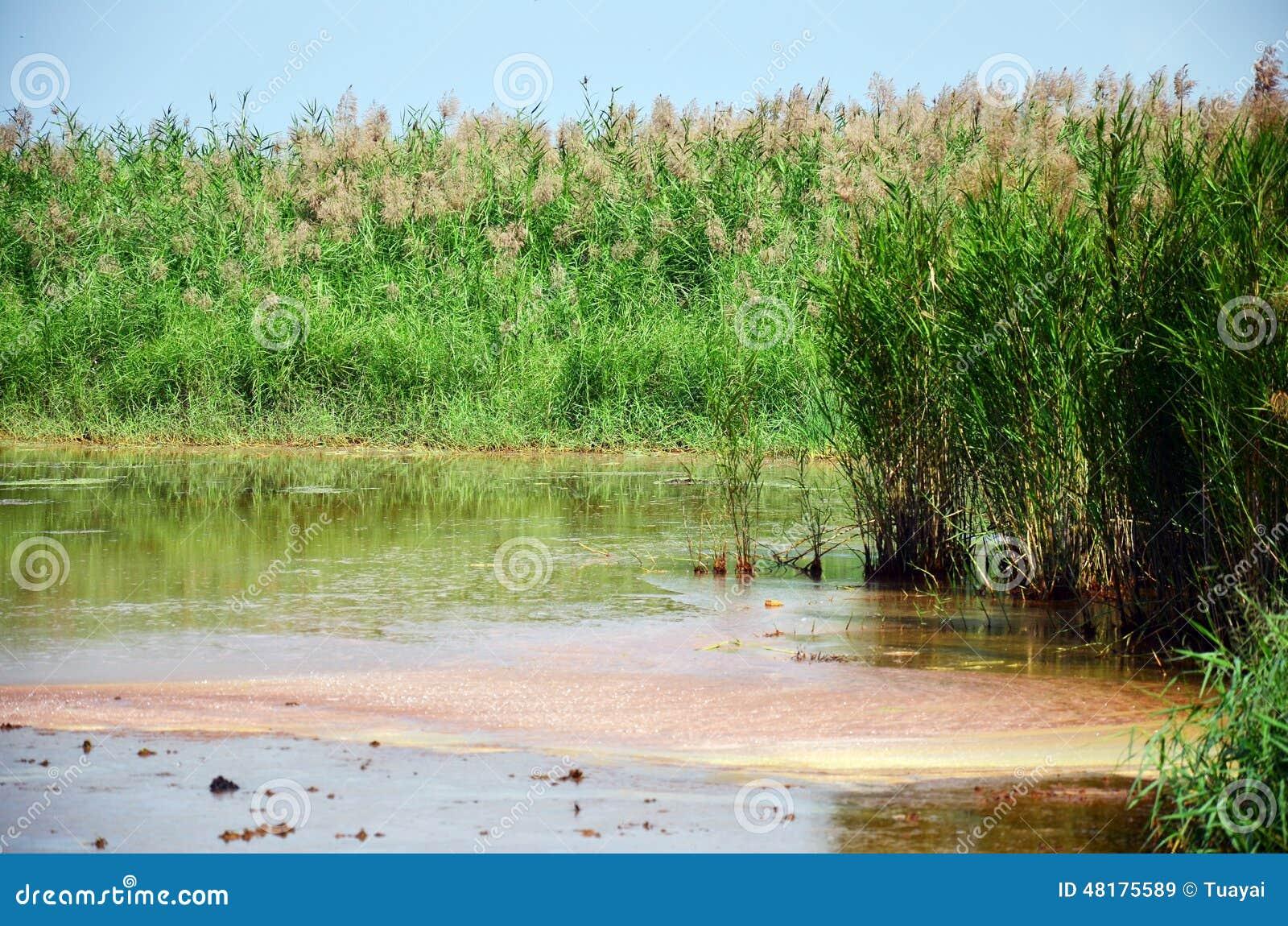 Efeitos ambientais dos produtos químicos e dos metais pesados no solo