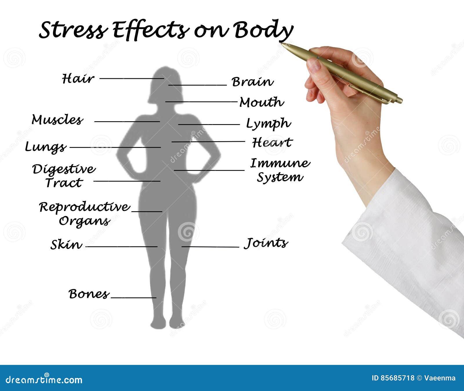 Efeitos do esforço no corpo