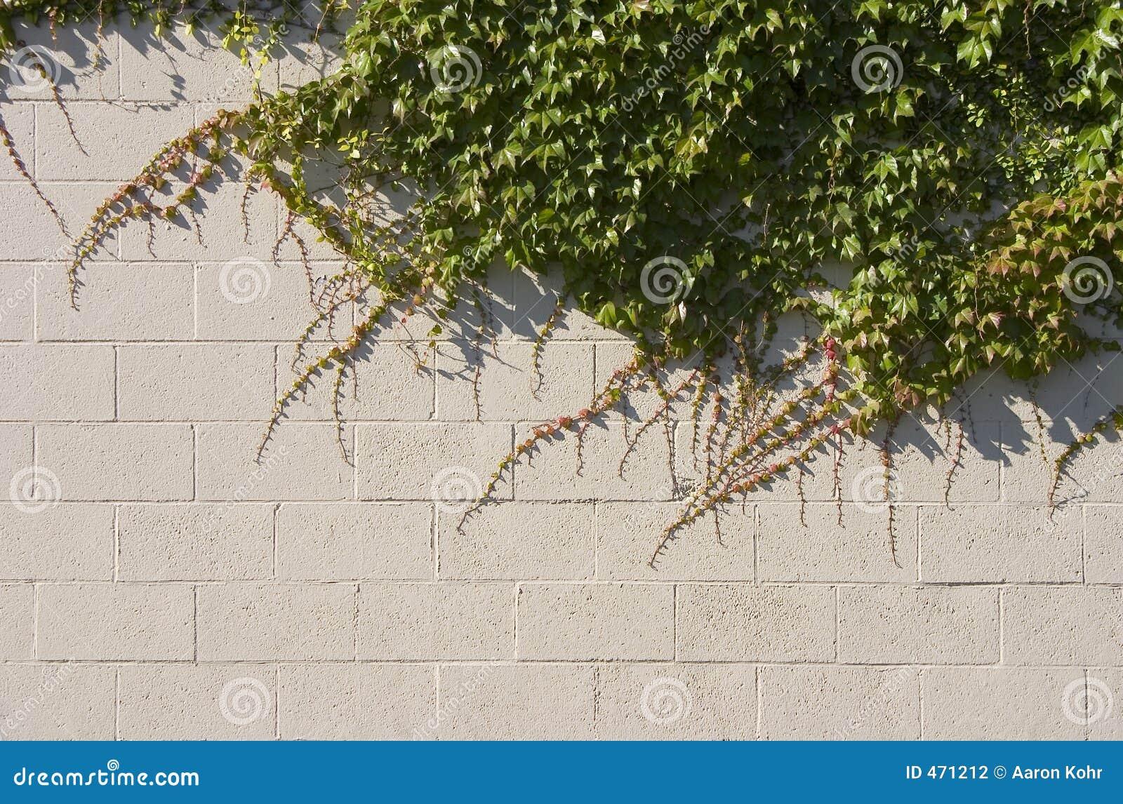 Efeu-Wand Stockfoto. Bild Von Serpentine, Grün, Fractal
