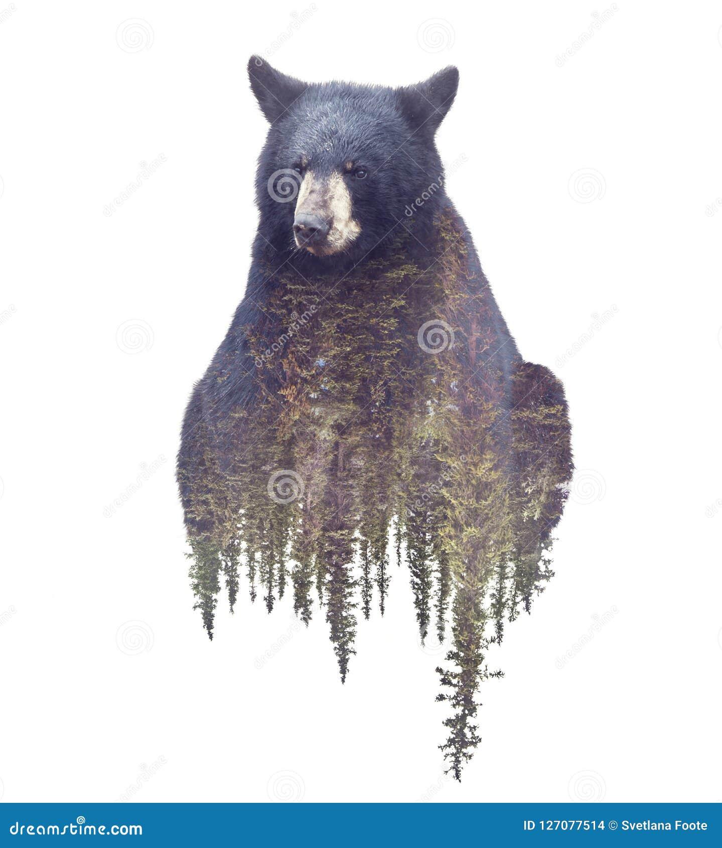 Effet d ours et de Forest Watercolor Double Exposure