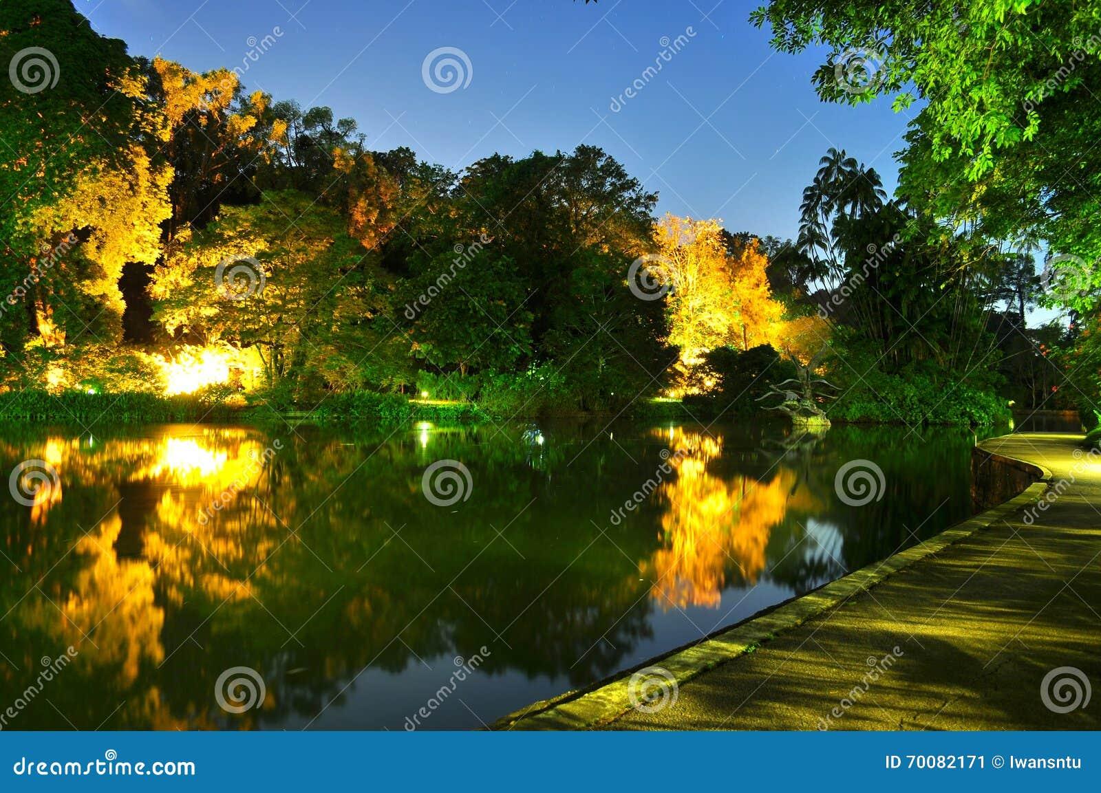 Effetto della luce sugli alberi da uno stagno al giardino for Stagno da giardino
