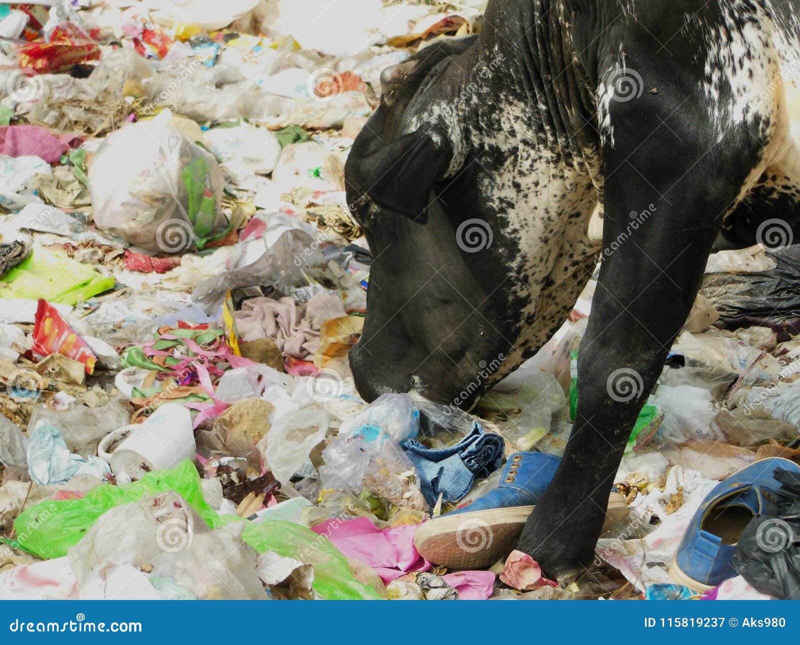 Effrayez manger la question de risque sanitaire de pollution d environnement de déchets de sachet en plastique de polythène à la