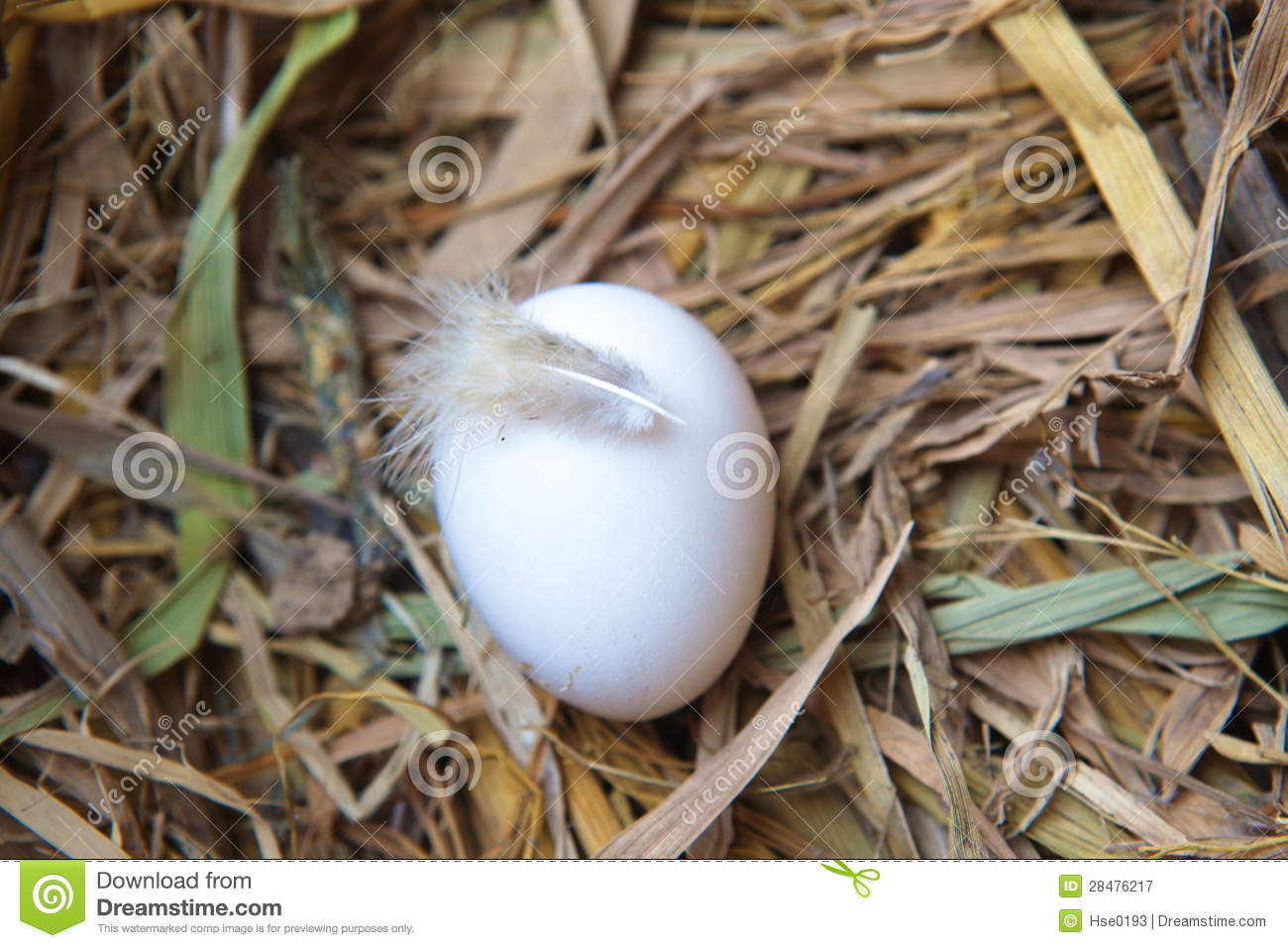 Download Egg in nest stock image. Image of yellow, ingredient - 28476217