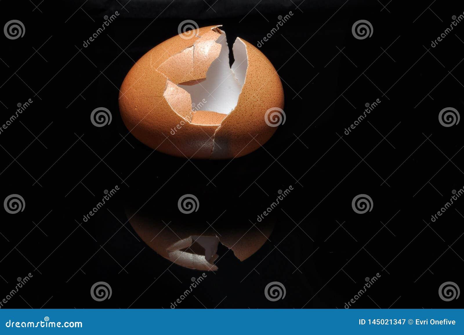 Egg shell  on black background