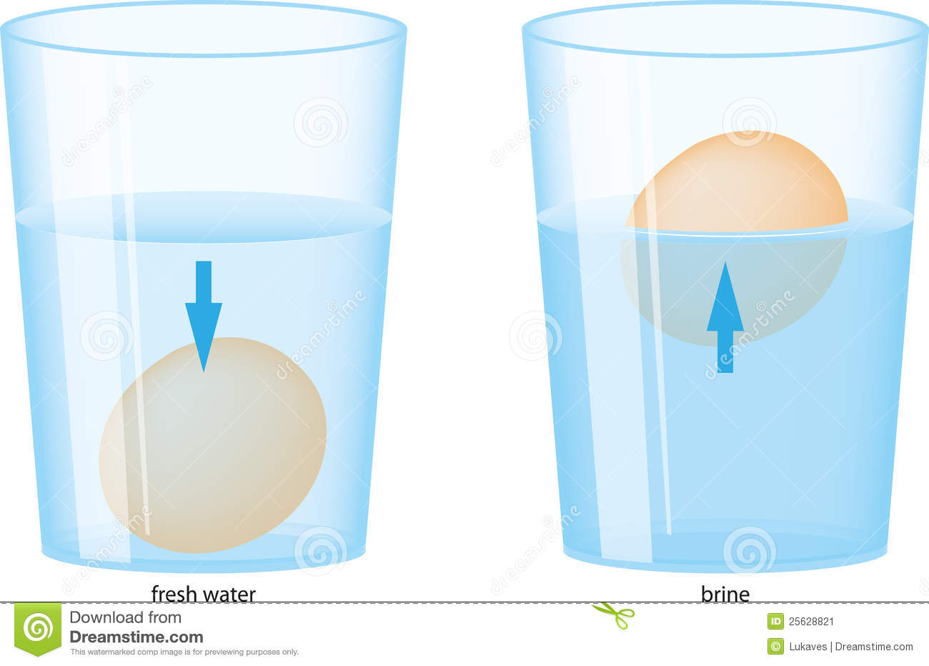 Egg And Water Stock Vector Illustration Of Down Salt