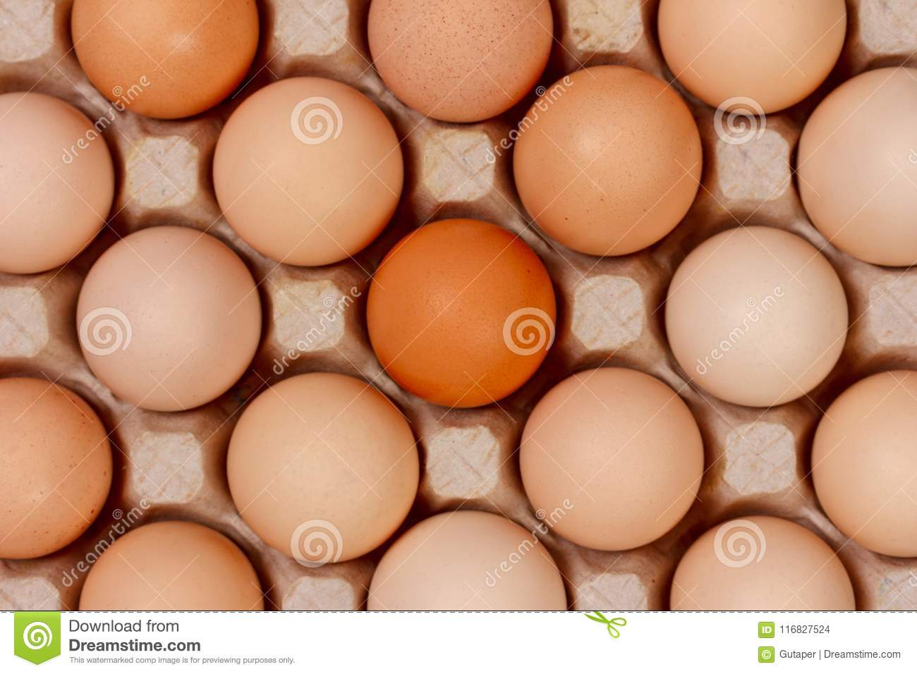 Download The Eggs In The Carton Boxes