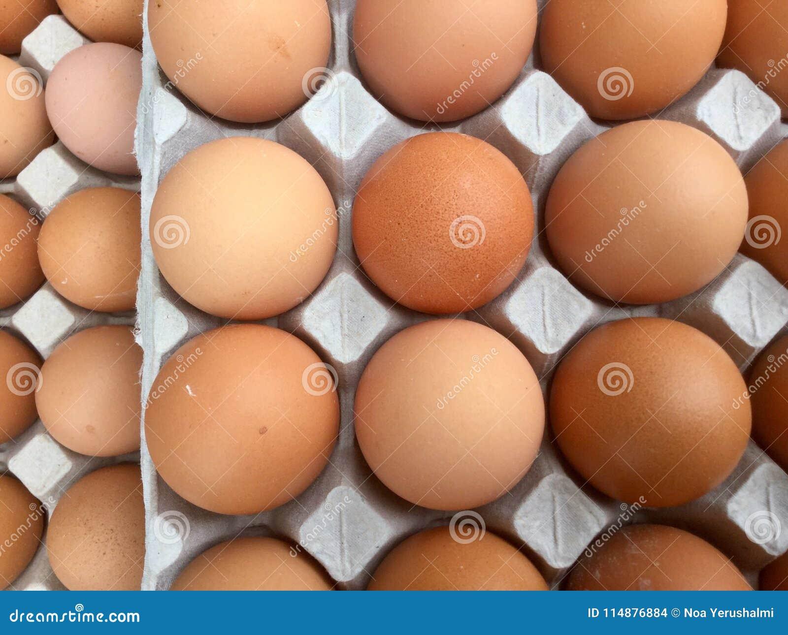 Eggs in Carton top overview Eggs In