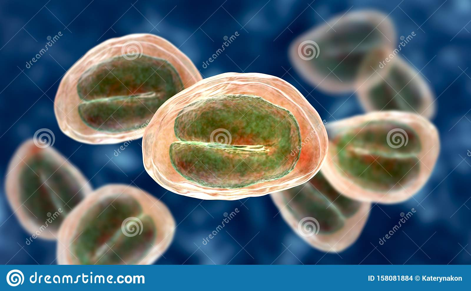 pinworm egy helmintus