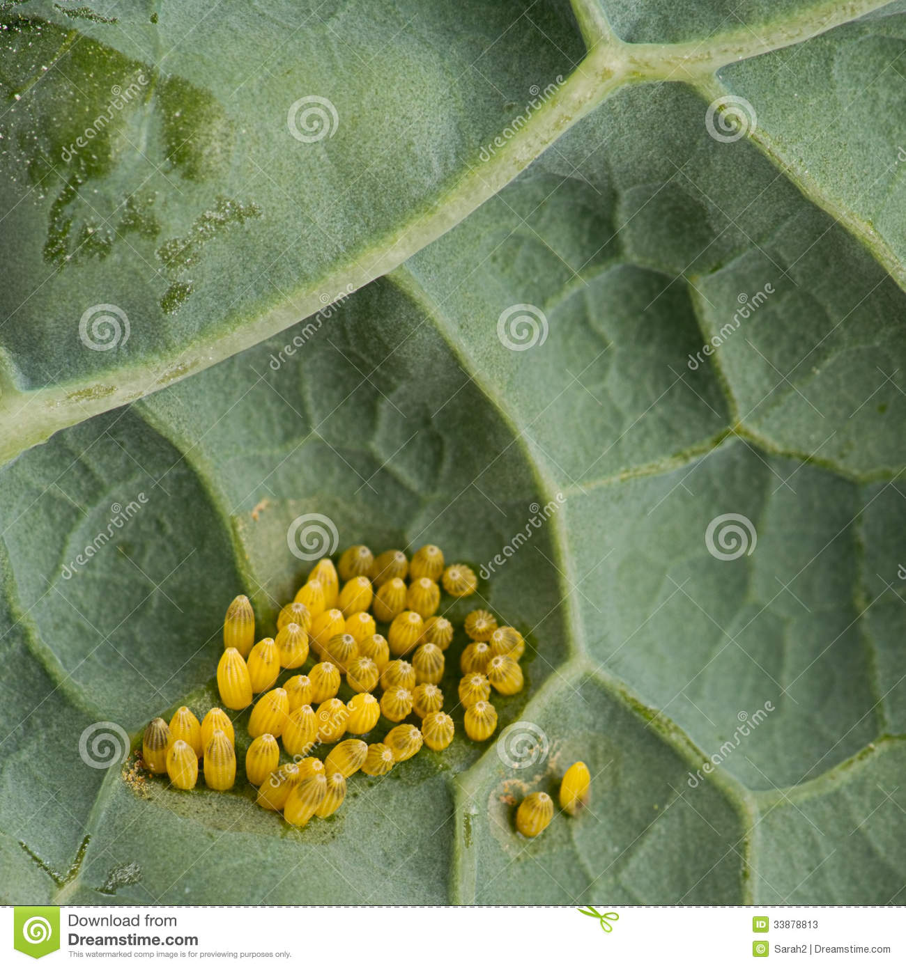assesment of pesticide use on cabbage Insecticide use in cabbage pest management in the cameron highlands, malaysia  since the vegetable production in cameron highlands has been impeded by an over-reliance on the use of pesticide .
