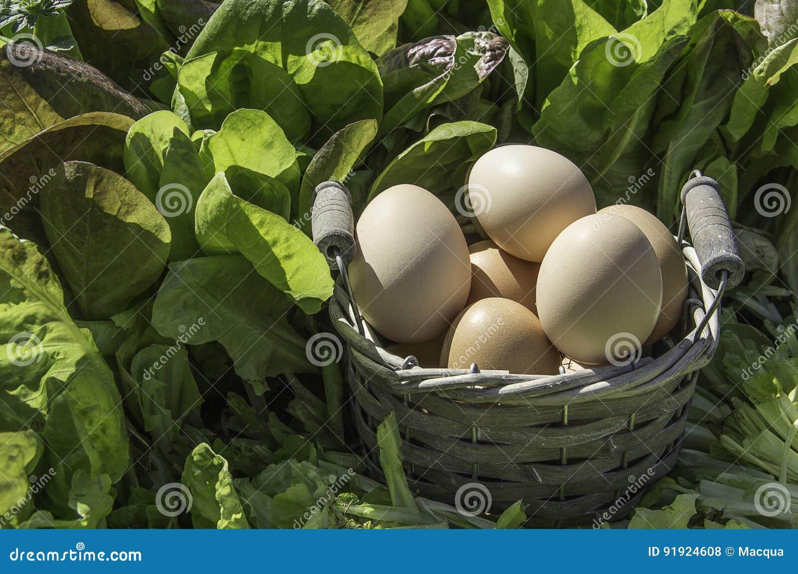 Eggs le panier dans un domaine d insalad