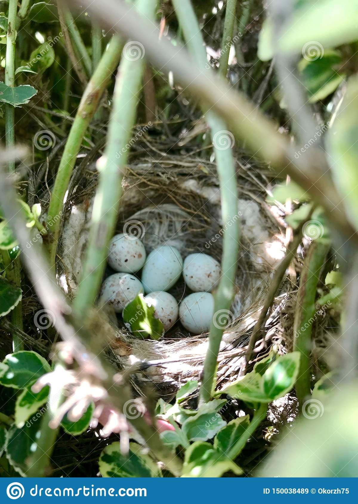 Eggs from oval strong shell waiting their mother in nest