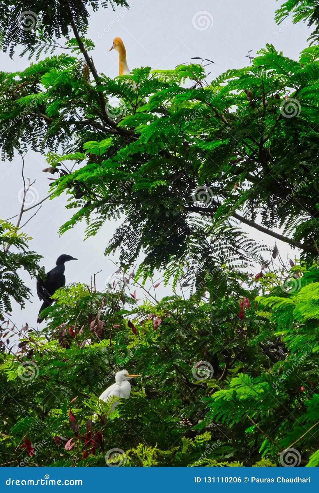 Egret американской змеешейки и скотин на дереве ослабляя на пасмурный день