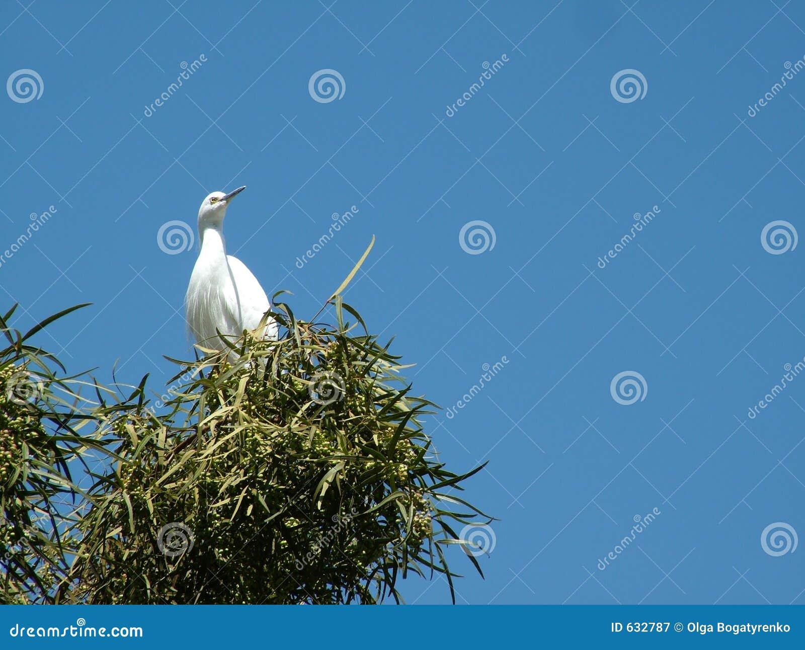 Download Egret большой стоковое изображение. изображение насчитывающей ожиданность - 632787