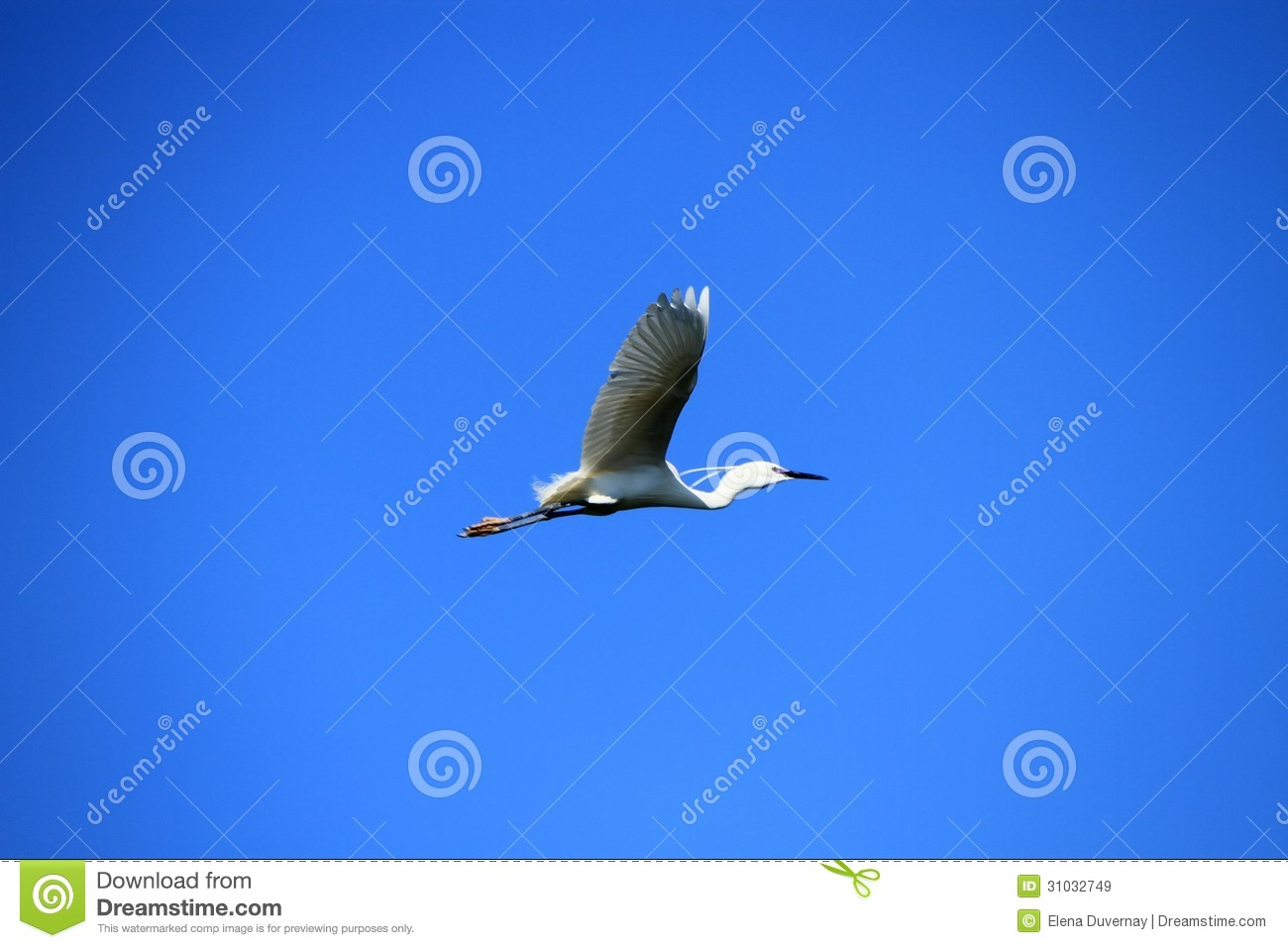 Beautiful white bird flying - photo#5