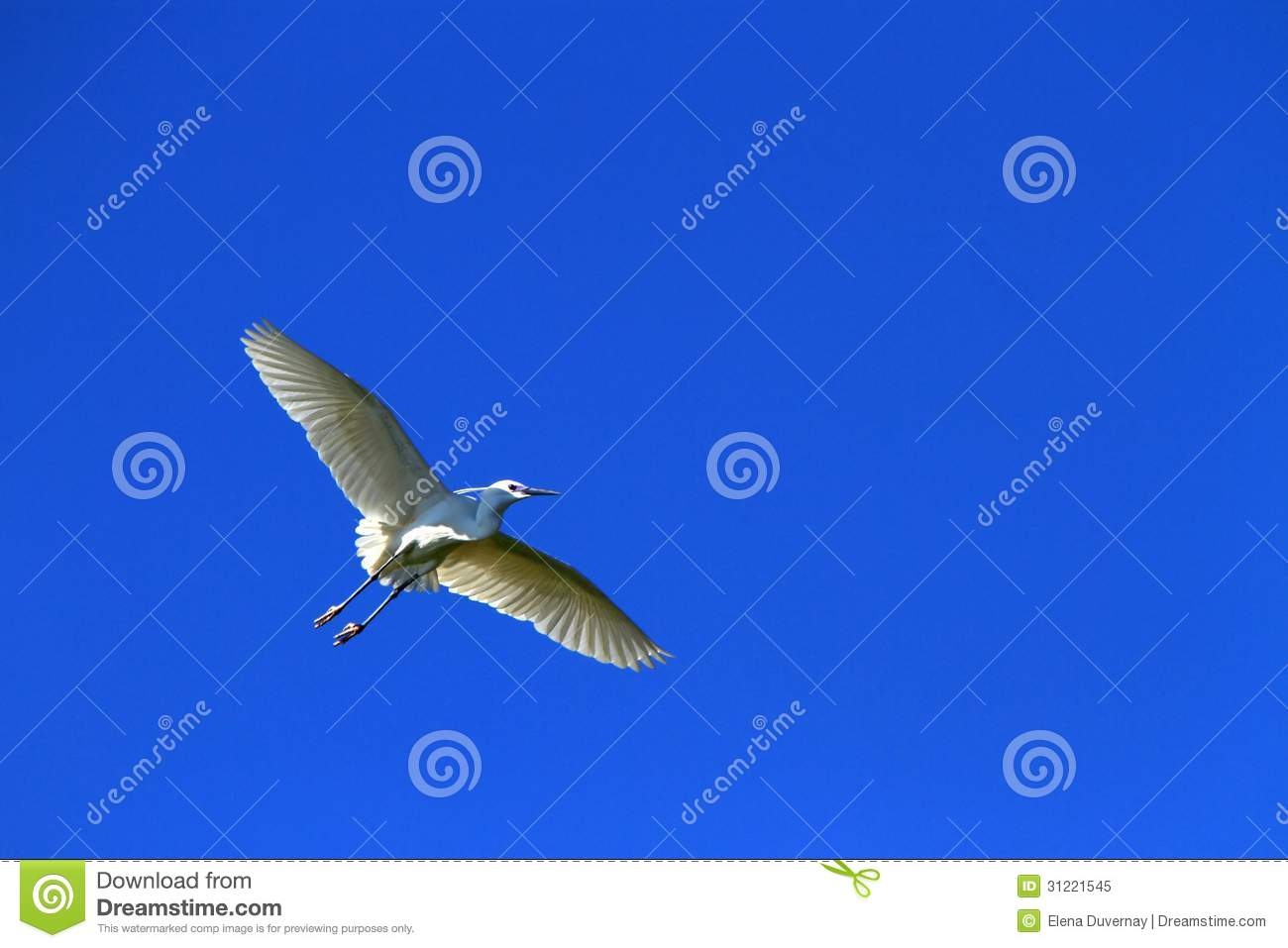 Beautiful white bird flying - photo#26