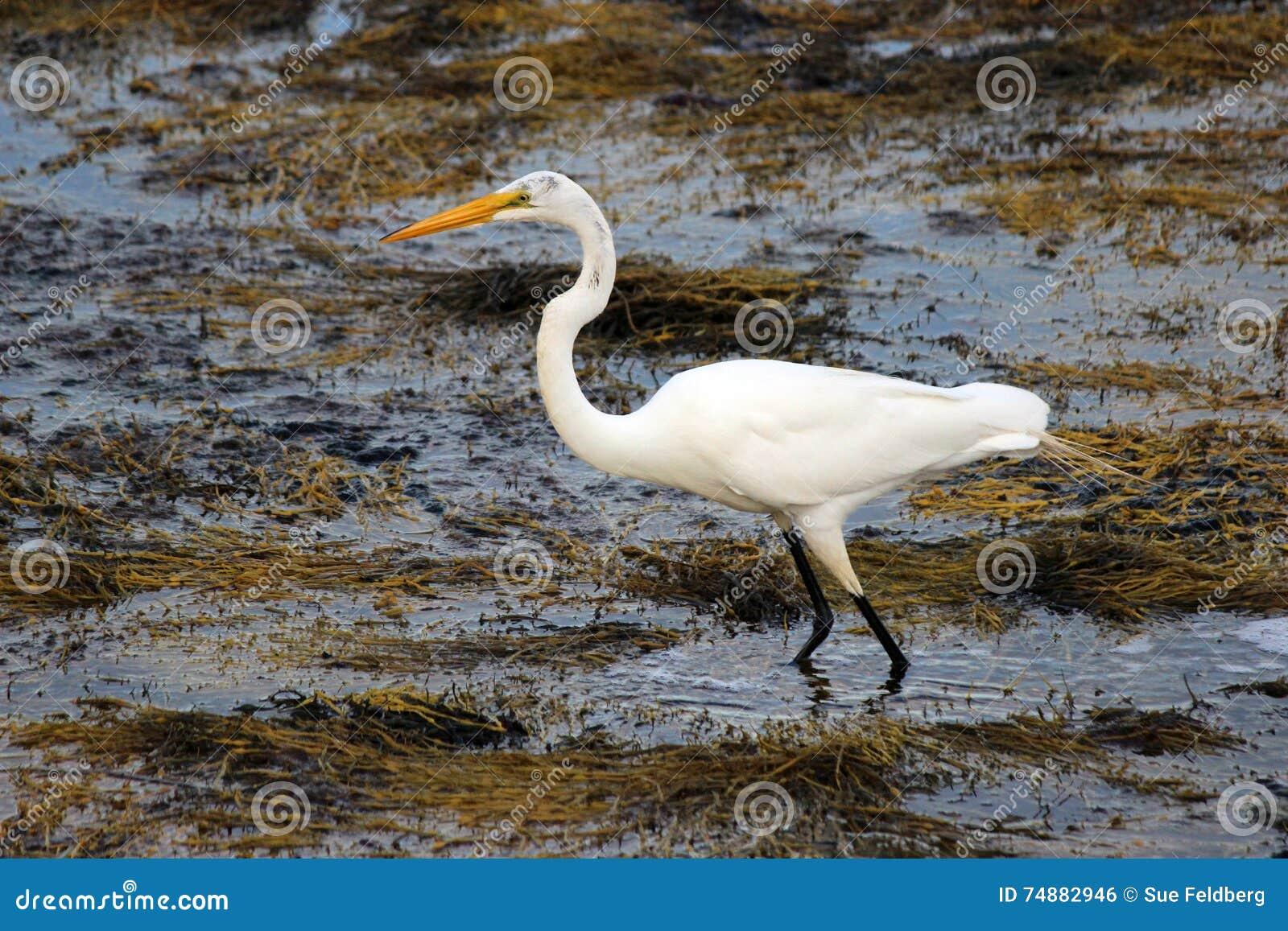 Egret da caça