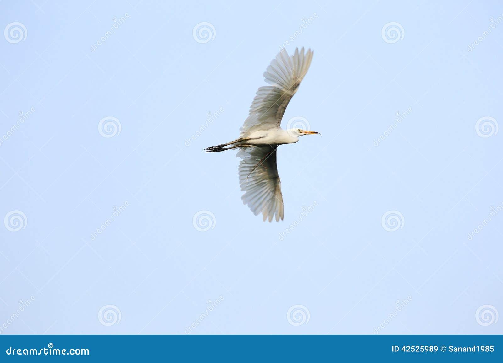 Egret w locie