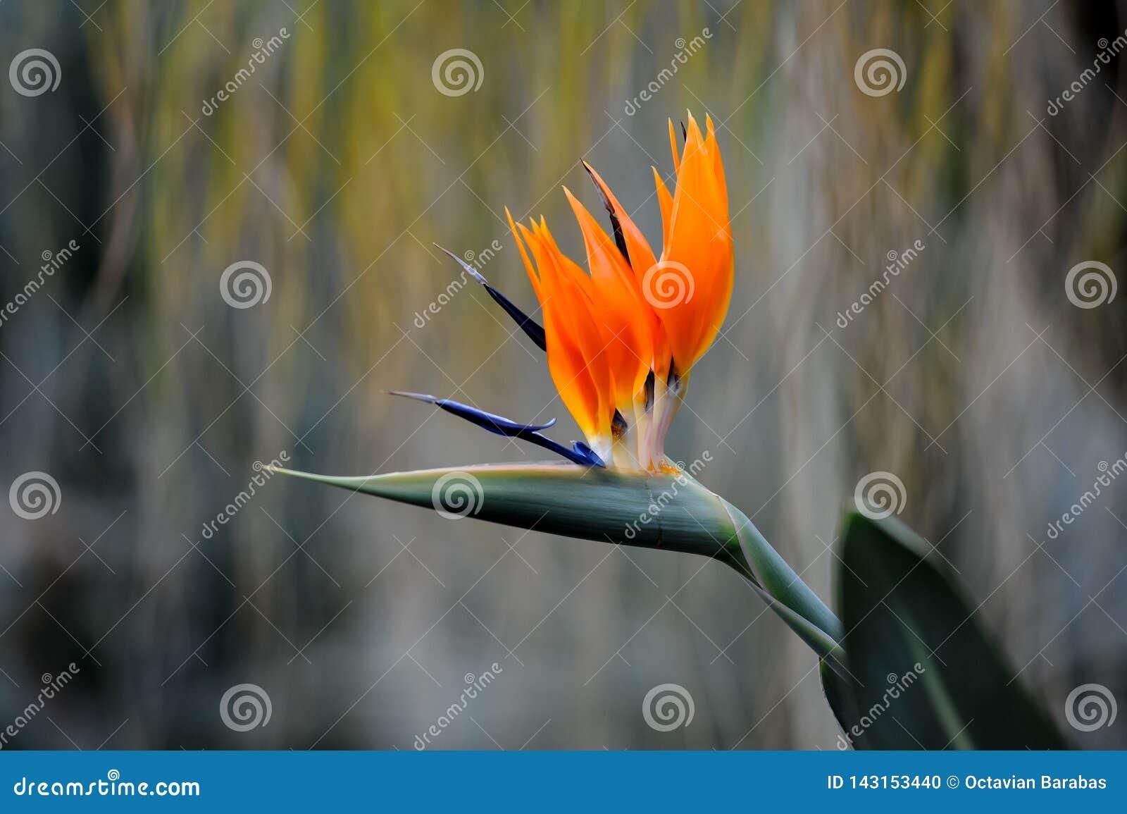 Egzotyczna pomarańczowa roślina w ogródzie botanicznym