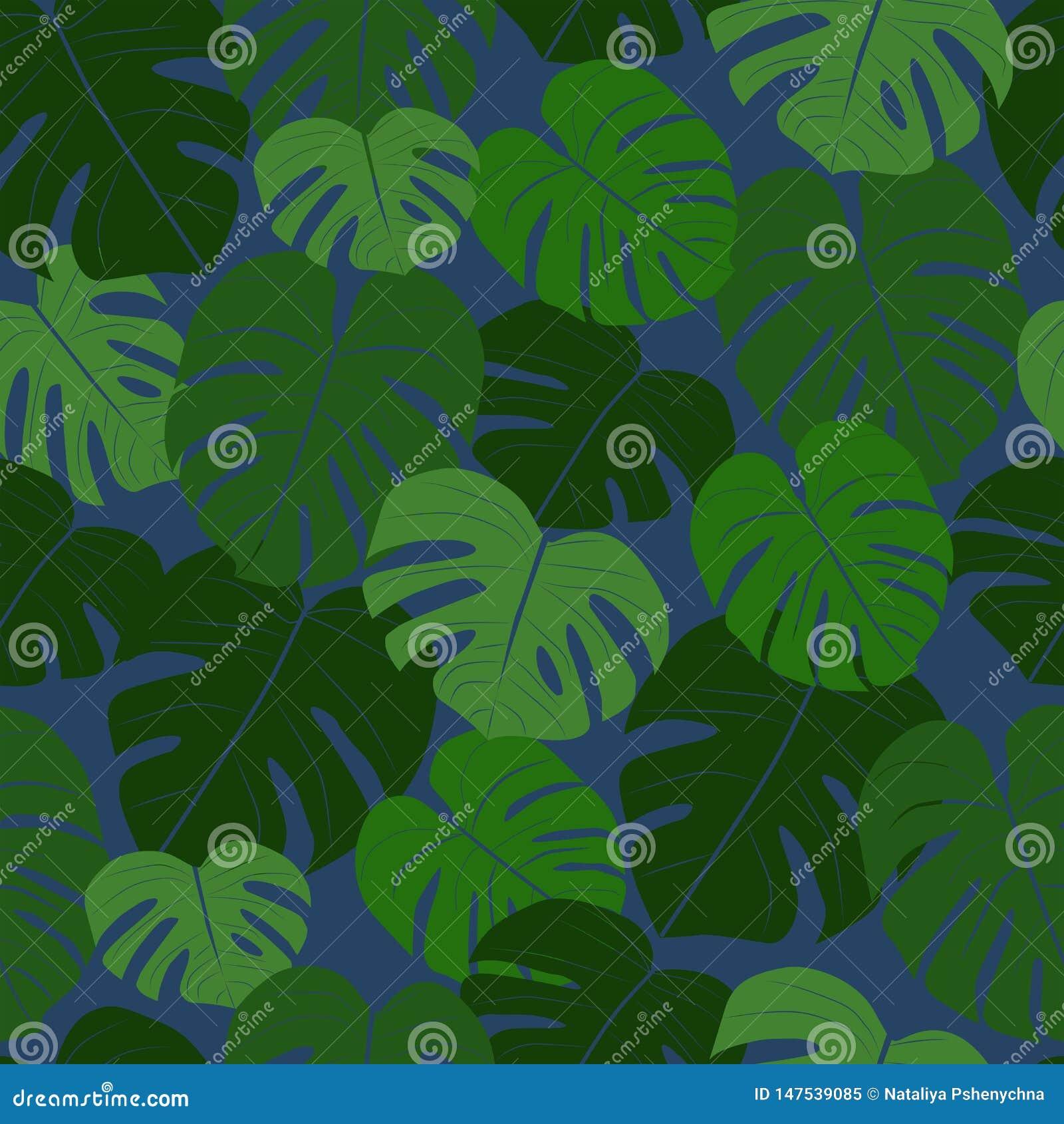 Egzotyczni tropikalni li?cie Monstera kolekcja
