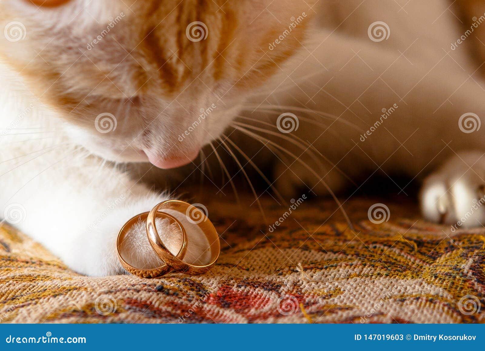 Eheringe auf dem Fuß der Katze