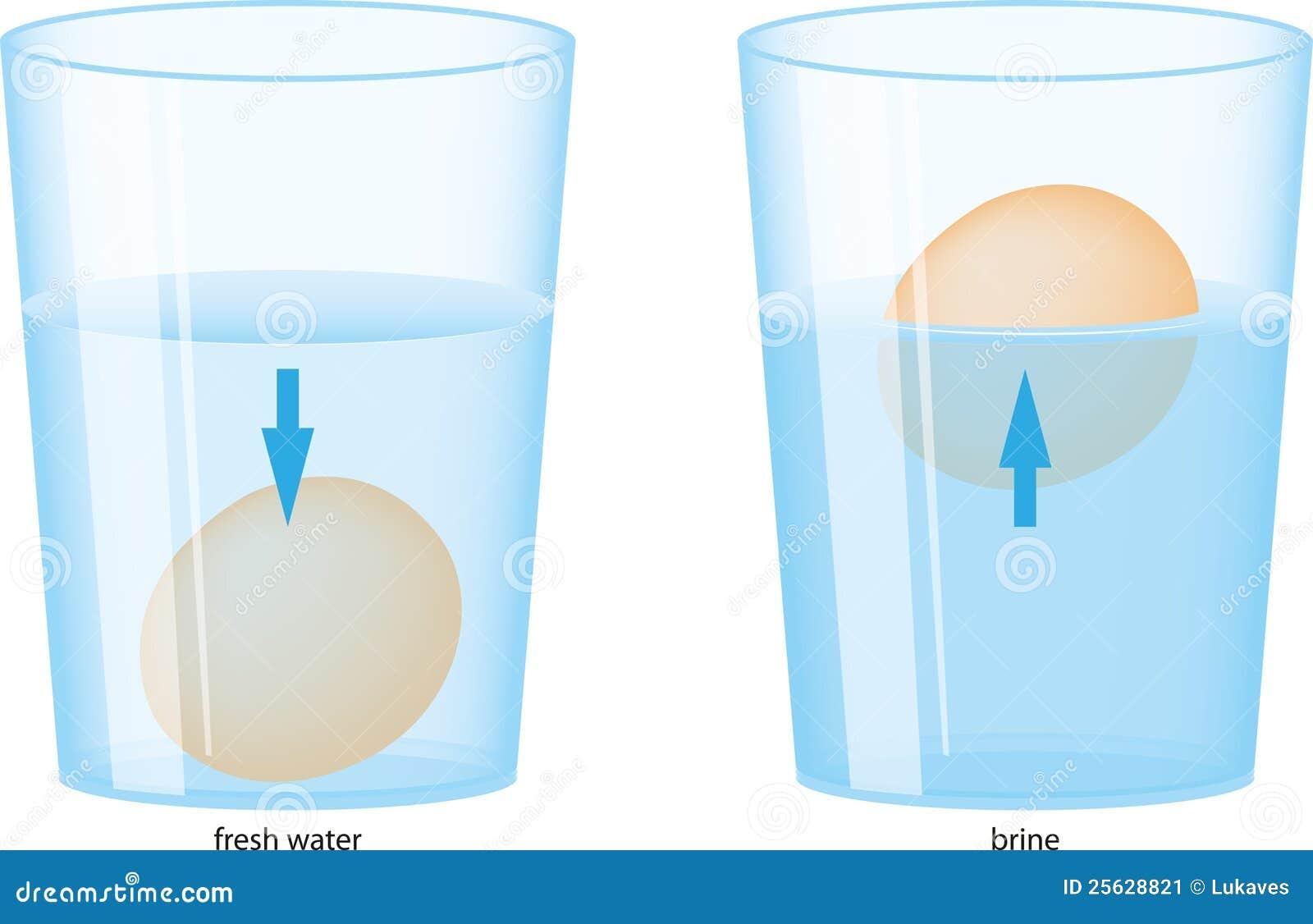 Ei En Water Vector Illustratie Afbeelding Bestaande Uit