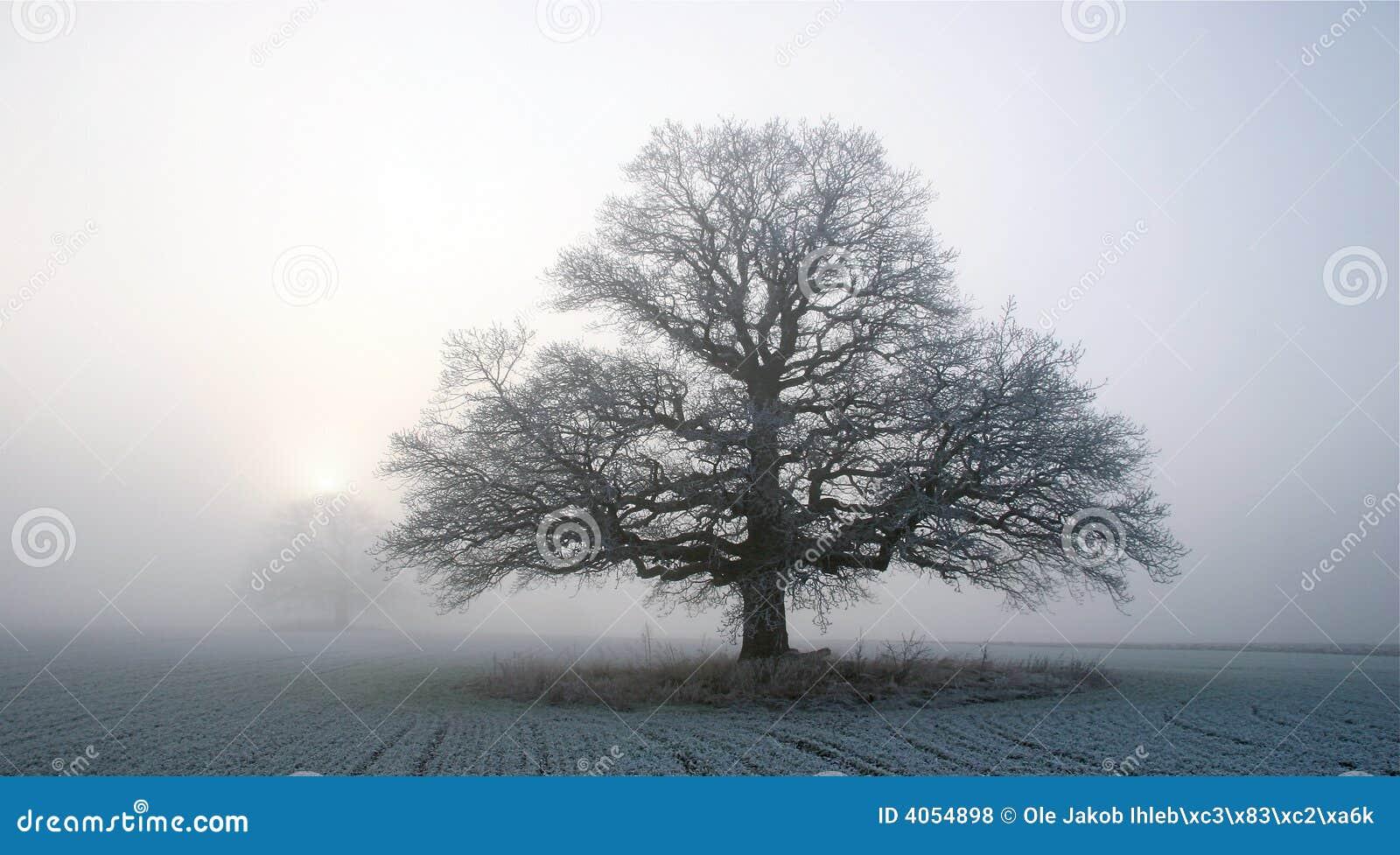 Eiche im Winternebel
