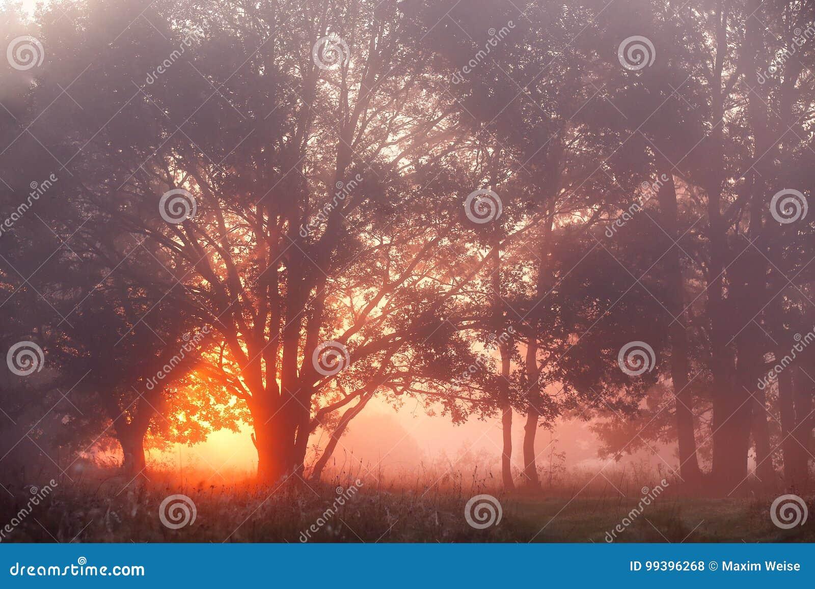 Eichen in der Wiese bei Sonnenaufgang, Sonnenstrahlen, die durch Mornin brechen