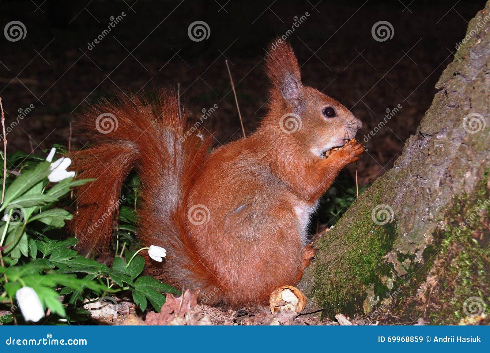 Eichhörnchen, das eine Mutter isst