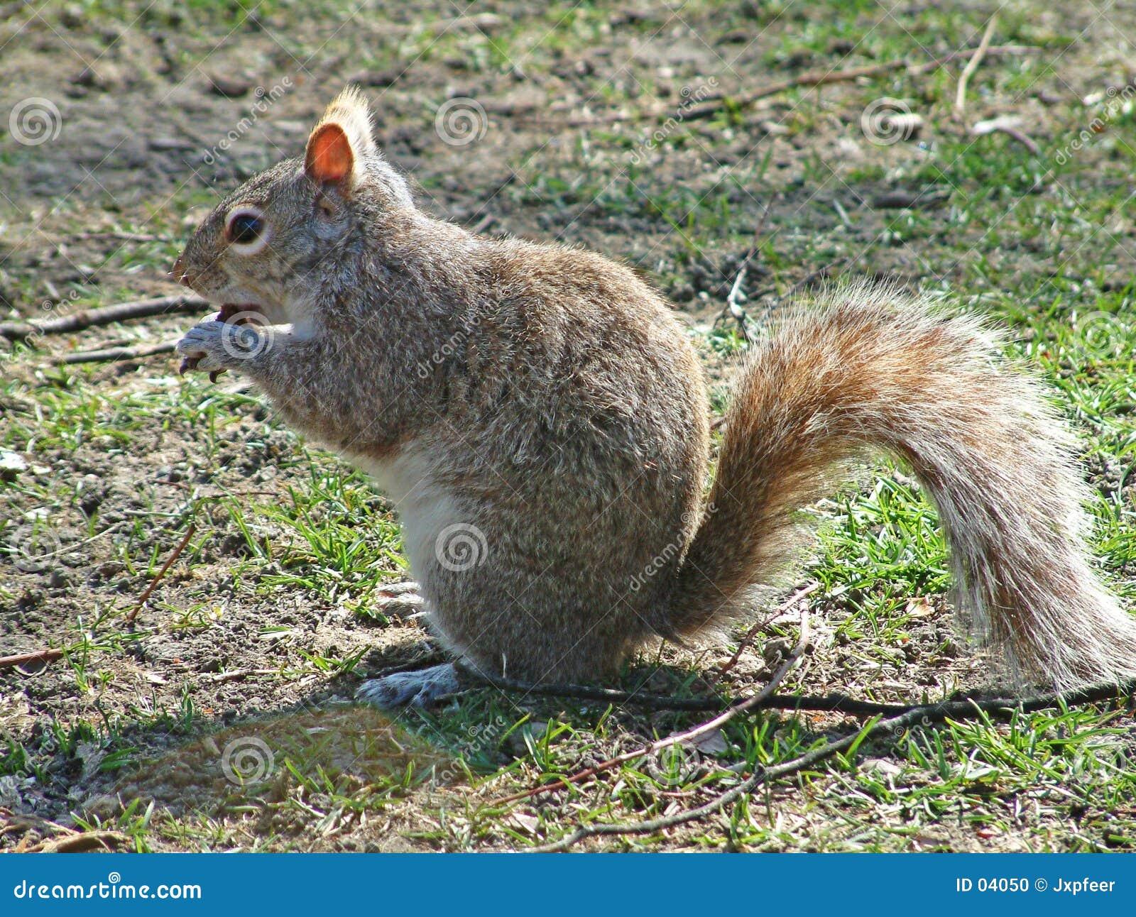 Eichhörnchen, das einen Schokoladenkuchen isst