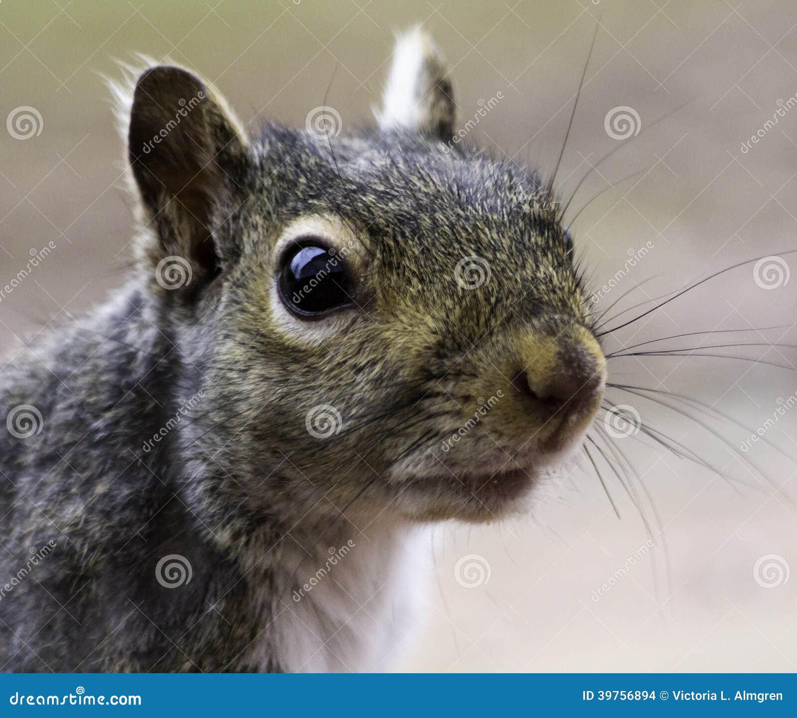 Eichhörnchen im Gesicht Big dick Spieler
