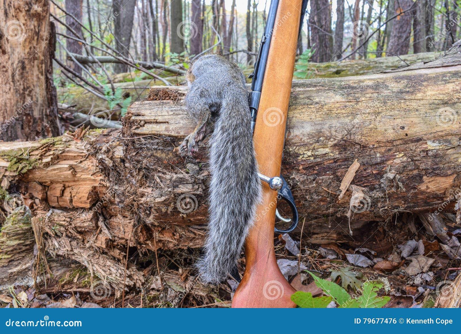 Eichhörnchen-Jagd