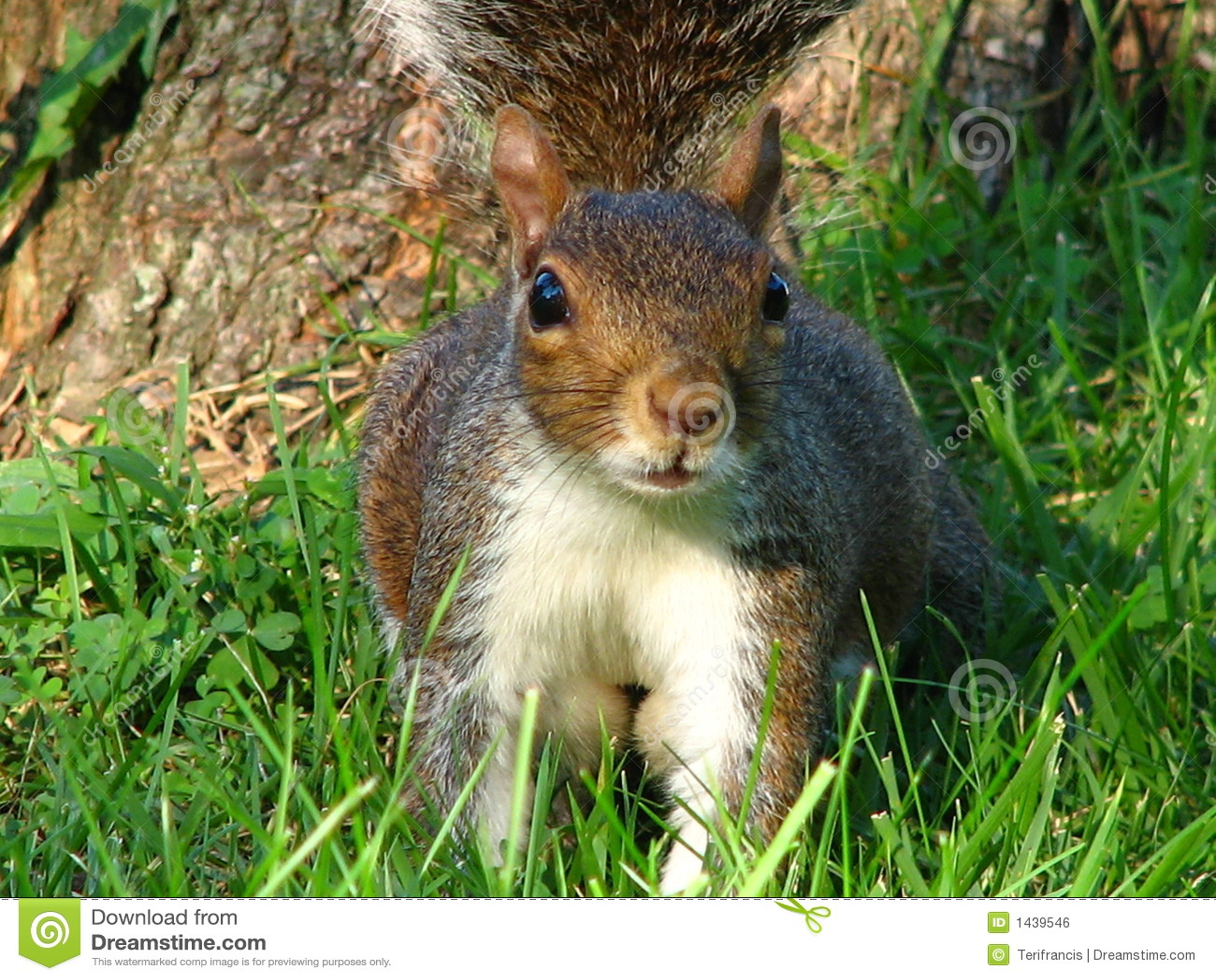 Eichhörnchen-Nahaufnahme