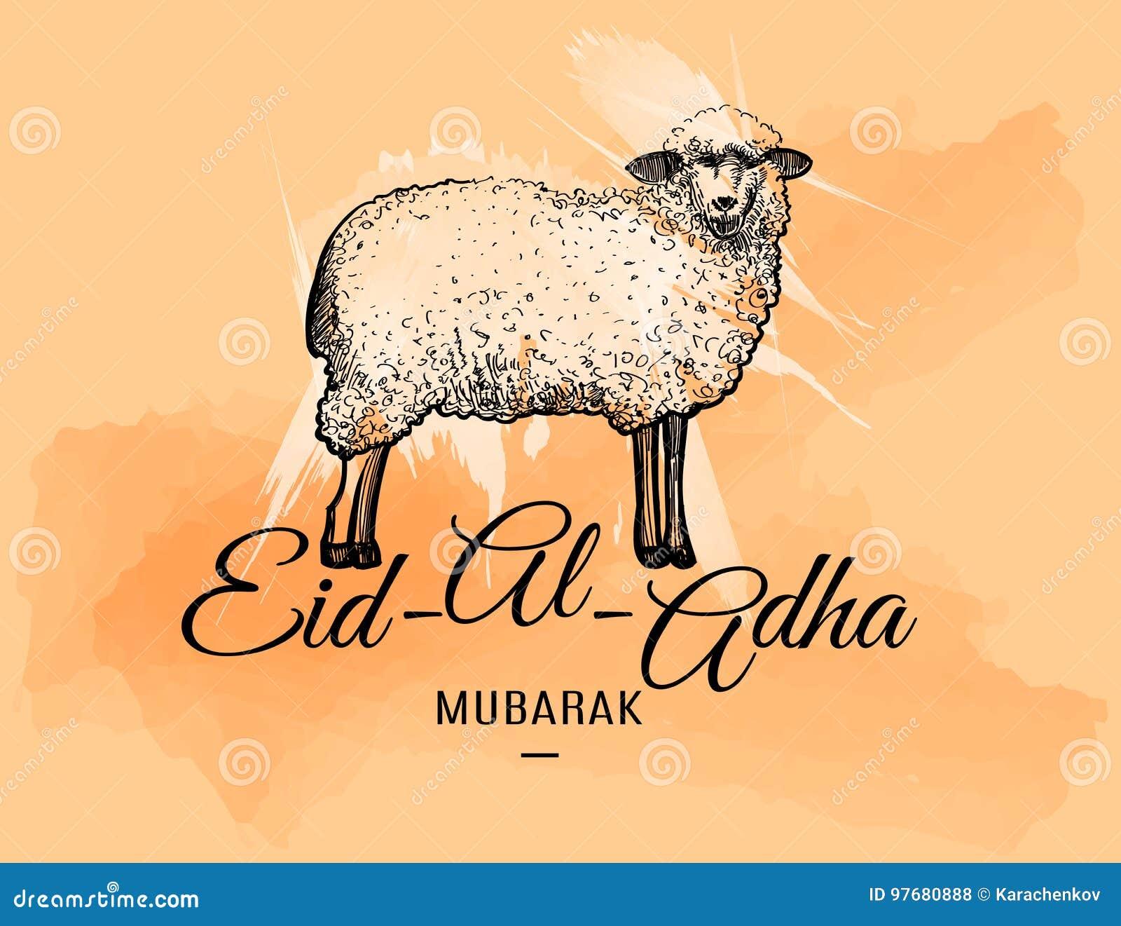 Eid Al Adha Greeting Card With Doodle Sheep Stock Vector