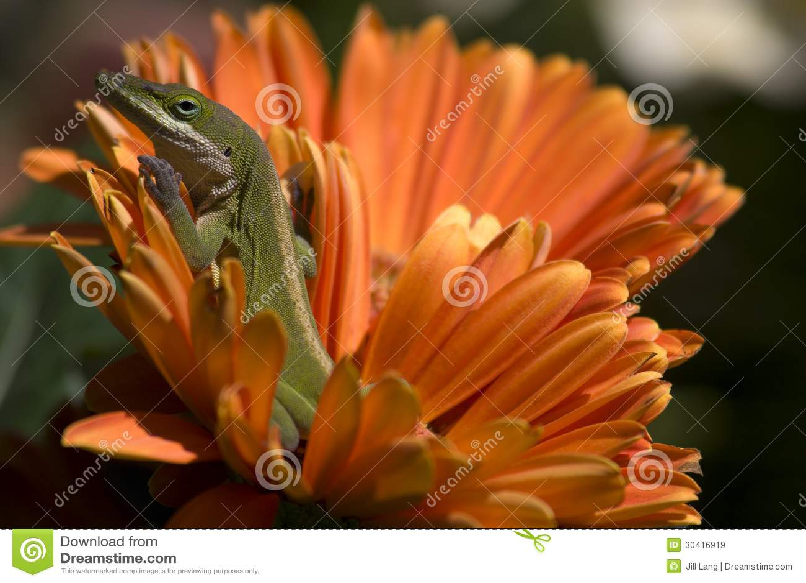 Eidechse auf Blume