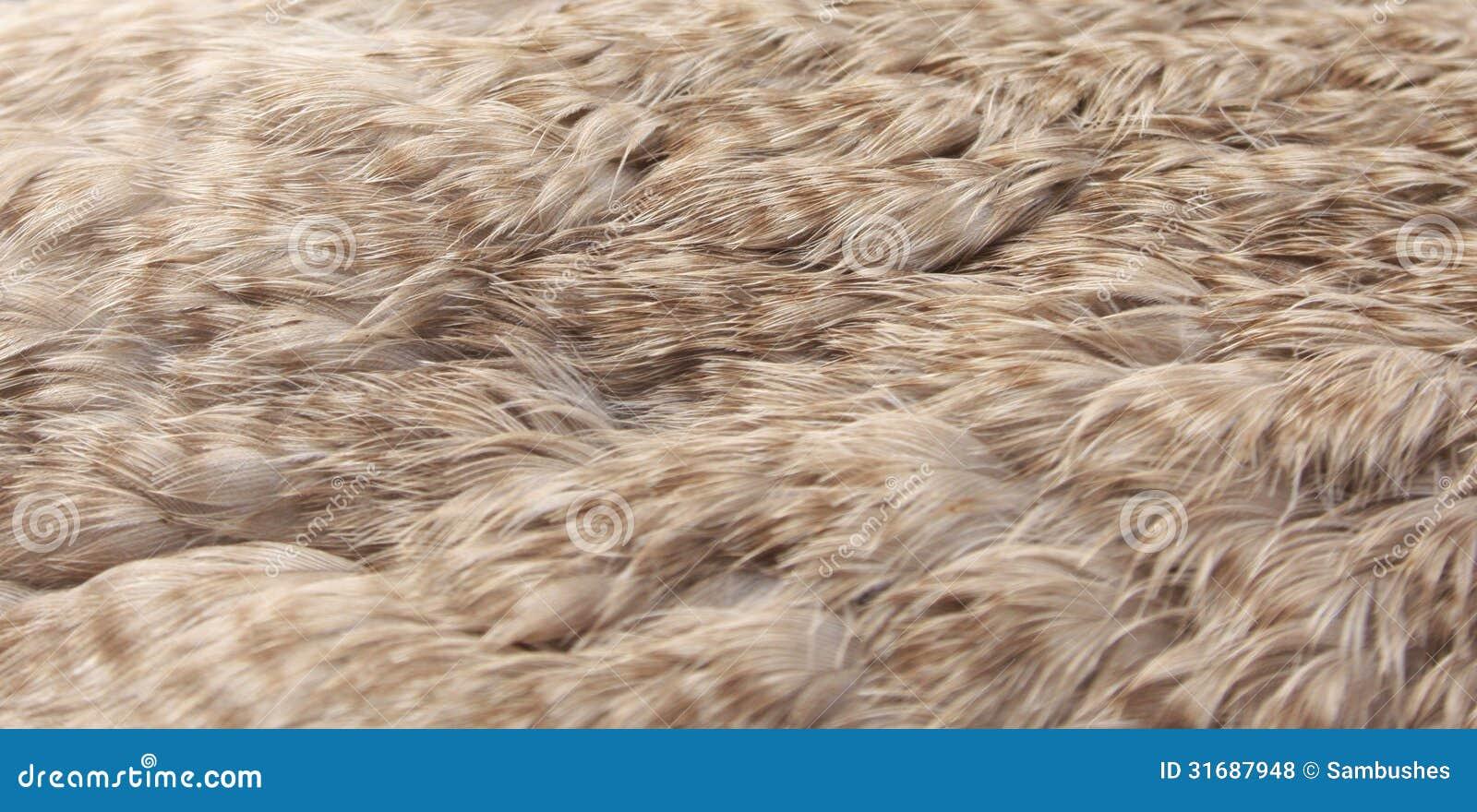 Eider Duck Feathers Eiderdown Stock Photo Image 31687948