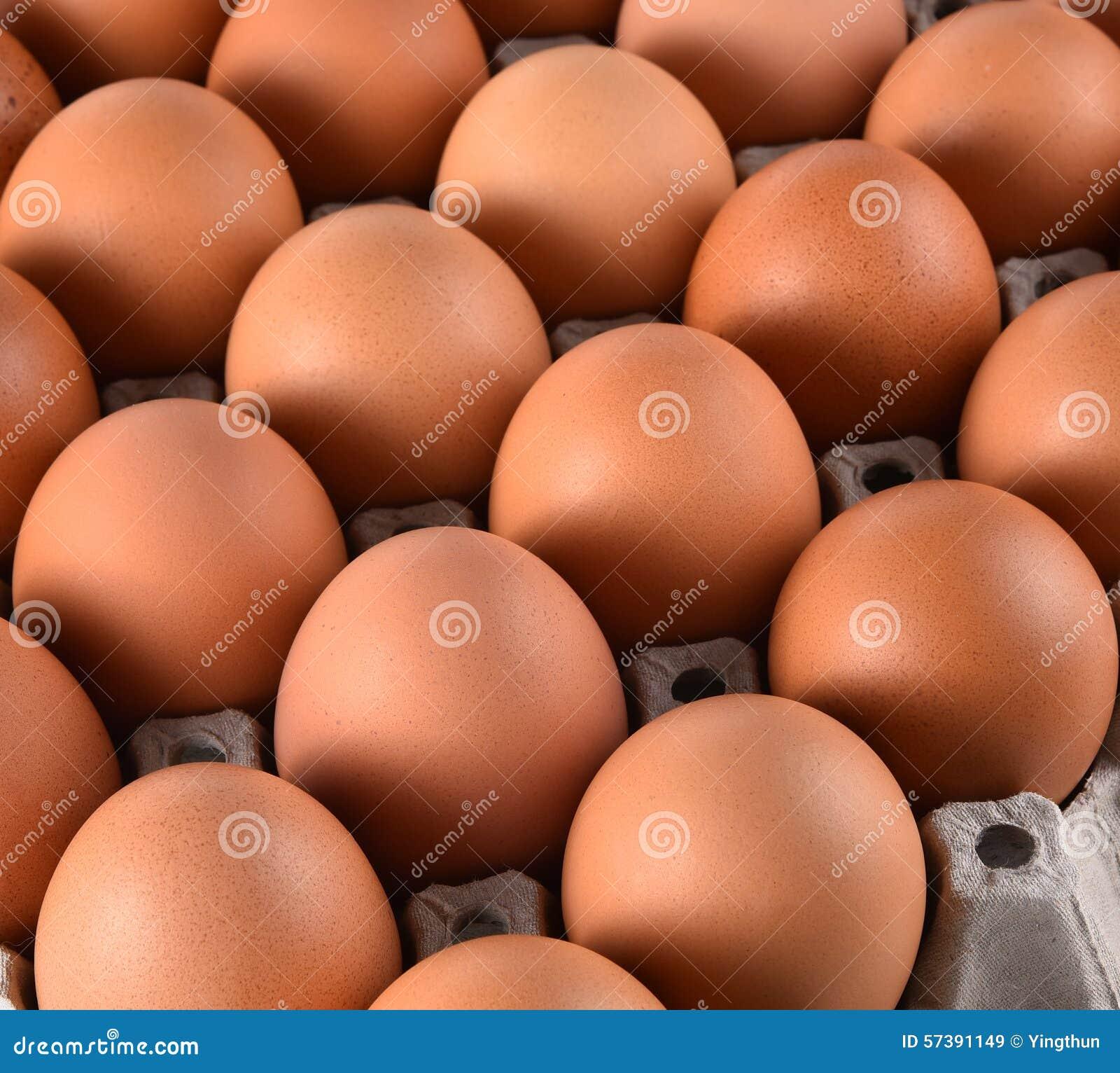 Eieren en het document van het eierleggenblok