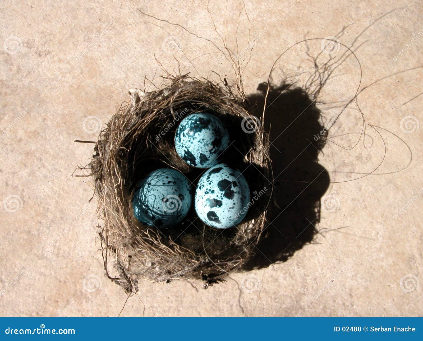 Eieren en nest