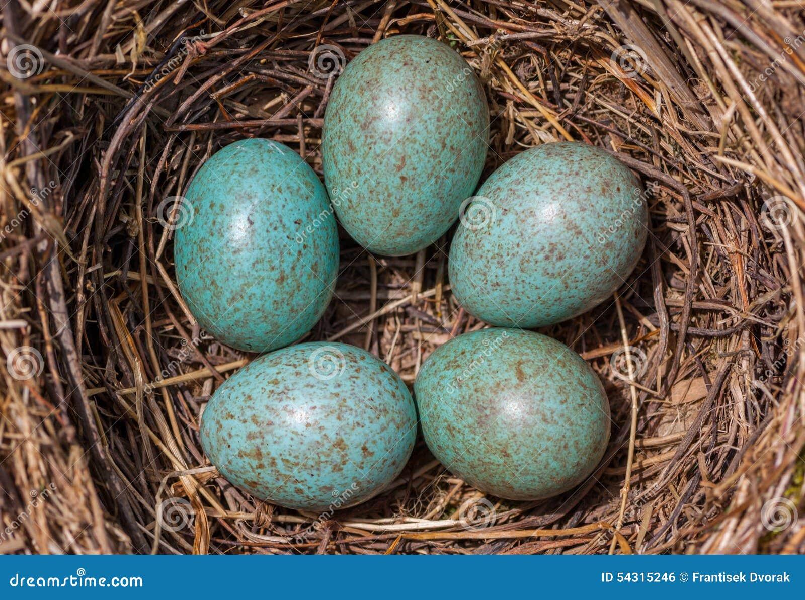 Eieren in het nest