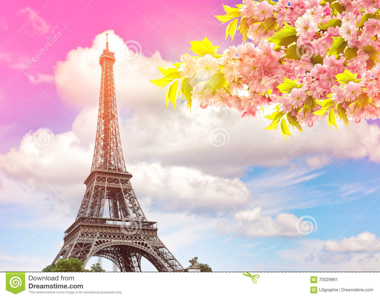 Eiffel Tower Paris sunset sky. Blossoming spring cherry tree