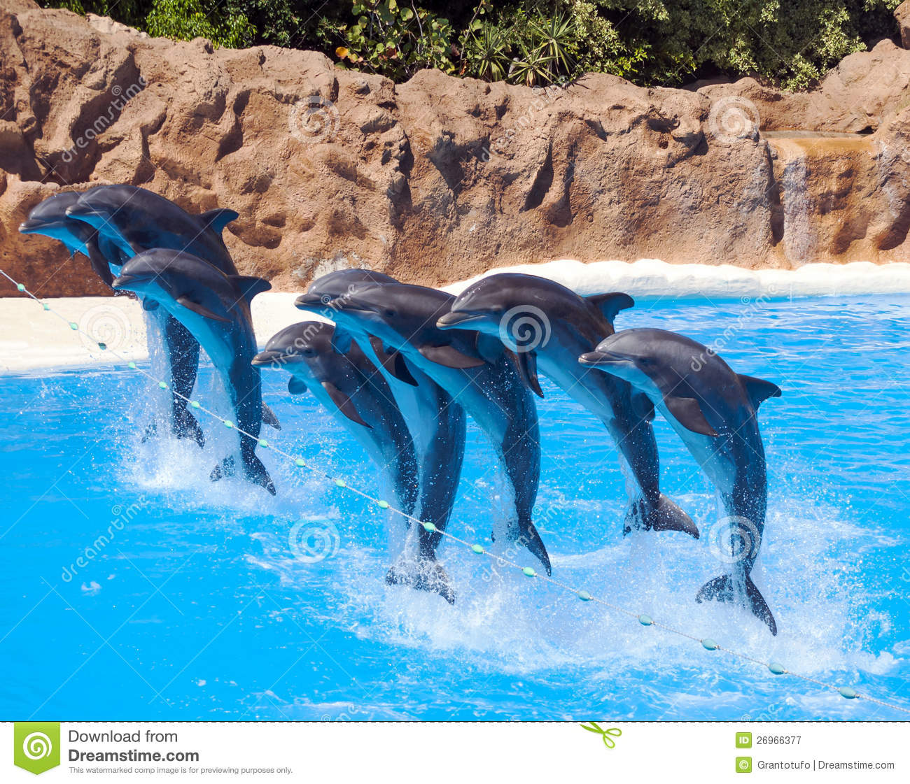 Eight Dolphins Jumping Group Vector Images Over