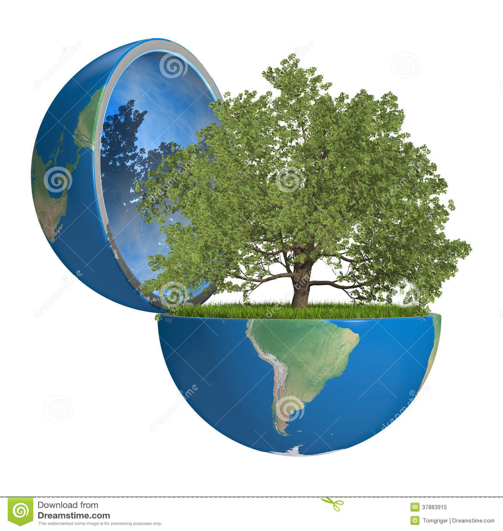 Eiken boom binnen planeet