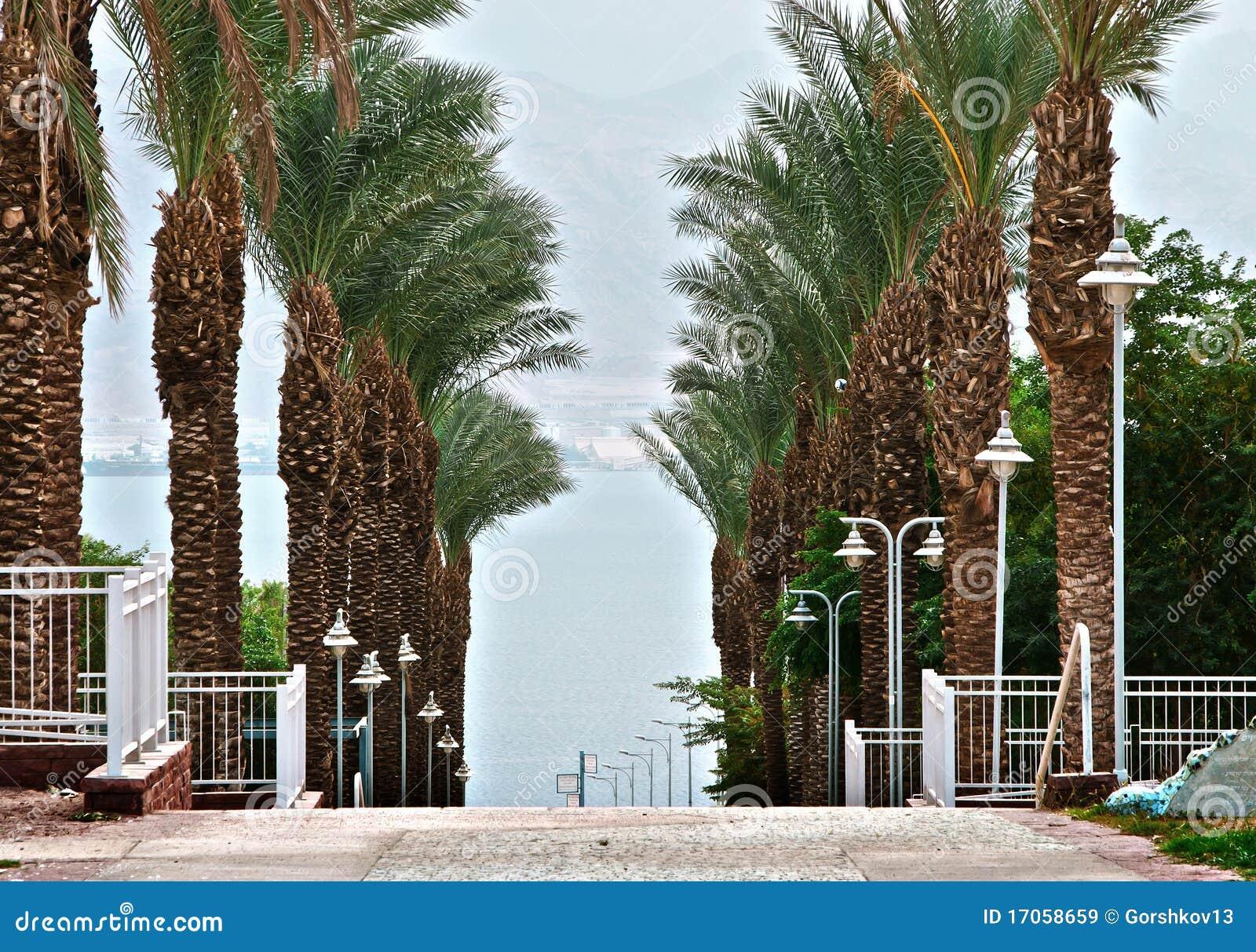 Eilat όψη Ερυθρών Θαλασσών το&upsilon